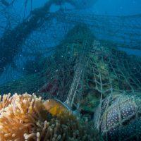 Fishing In Coral Reefs - Fishing Destructive Method.