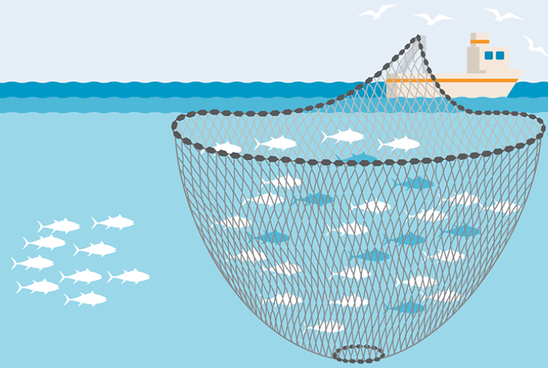 Vector Image of A Fishing Net Throwing From The Boat.